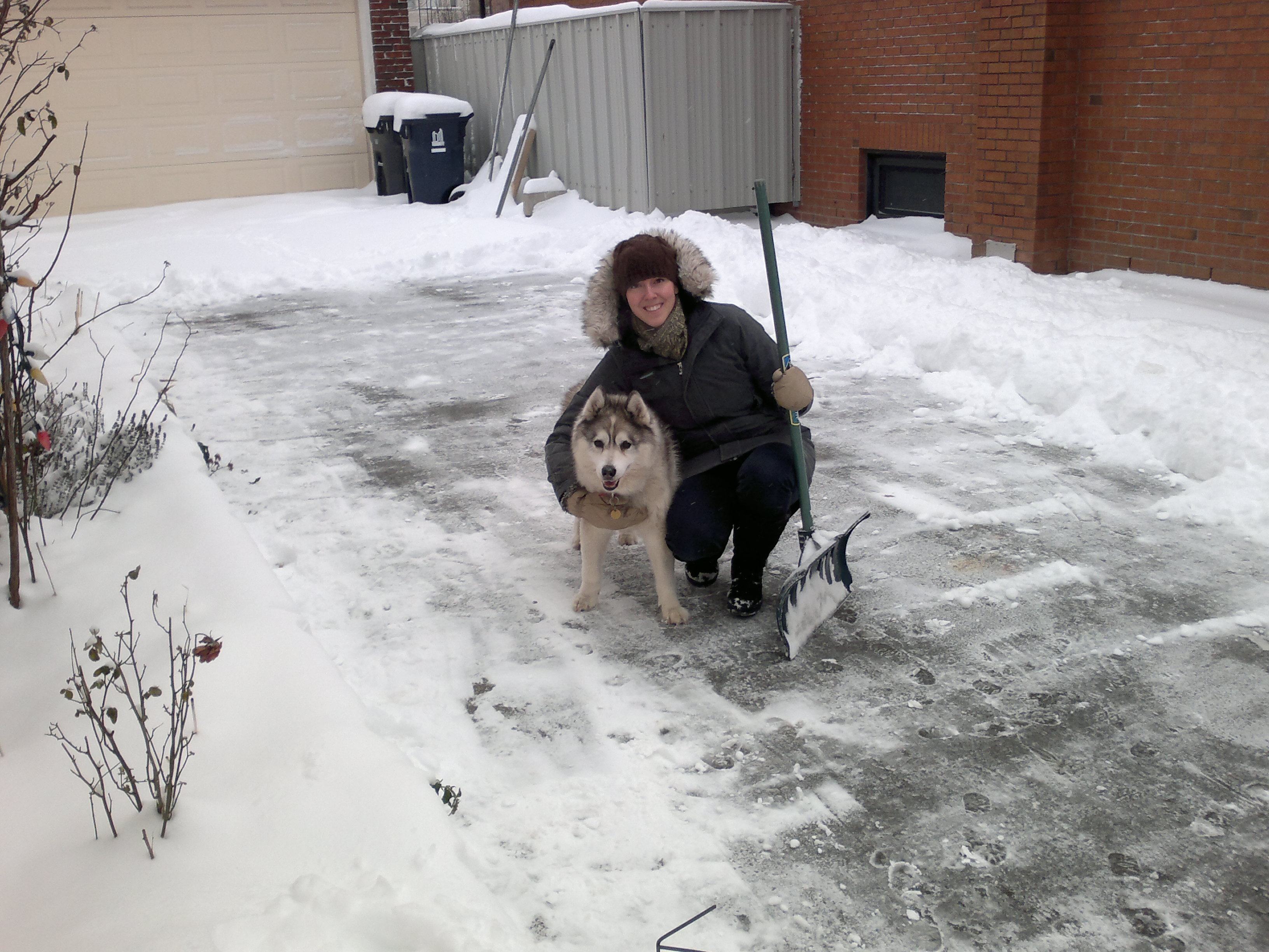 My Siberian Husky, Stella, who lived to the ripe old age of 16.